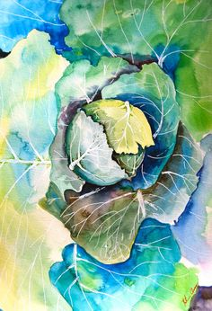 "Watercolor Painting, Original Still Life, Cabbage Painting, 11""x15"""