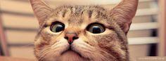 Resultado de imagem para CAPA FACE ANIMAL
