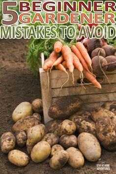 Starting a vegetable garden at home? Check out these 5 beginner gardener mistakes to avoid this gardening season. #garden #gardening #gardeningforbeginners #beginnergardener #Tips #ideas #Vegetable #vegetablegarden