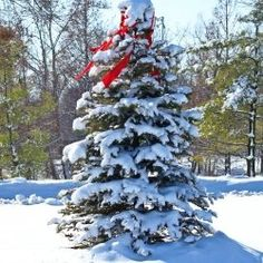 Real Christmas Tree vs Artificial Tree There is something quite magical about taking your family to a Christmas tree farm and choosing a live...