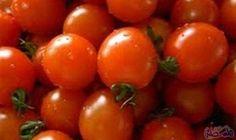 """الطماطم تحمي خلايا الجسم من السرطان والسكتة…: تشير أدلة جديدة إلى أن مادة """"الليكوبين"""" التي توجد في الطماطم ليست مجرد مركب يكافح مرض…"""