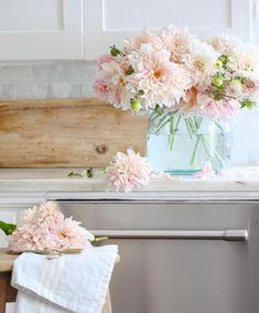 Pink Carnations, Pink Peonies, Dahlias, Fresh Flowers, Pink Flowers, Beautiful Flowers, Home Nyc, Pink Geranium, Purple Garden