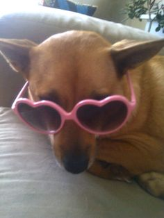 #ArloNeedsGlasses