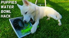 Frozen Toys Hack for Your Dog. i wonder if this will work for my neighbors dog!