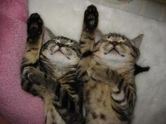 synchronized cats 1