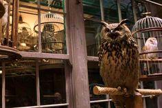 Hogwarts | Harry Potter | Pinterest: xchxara