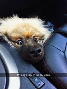 Hundreds of Funny and Adorable Dog Pictures, Dog Memes and yes Dog Shaming! It ends up that Man's Best Friend is as funny as they are loyal! Funny Animal Memes, Dog Memes, Cute Funny Animals, Funny Animal Pictures, Cute Baby Animals, Funny Cute, Dog Pictures, Funny Dogs, Funny Humor