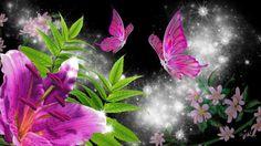 Pink Lily Wallpaper, Butterfly Wallpaper, Hd Wallpaper, Hd Desktop, Stargazing, Flowers, Plants, Painting, Floral Backgrounds