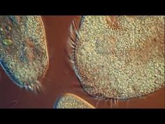 ▶ One Drop of Water! Amazing High Definition Microscopy Video! - YouTube