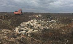 Более 30 кубов мусора вывезено благодаря Госадмтехнадзору - Сайт города Домодедово
