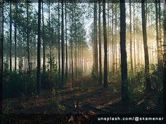 photography of tall trees at daytime photo – Free Forest Image on Unsplash Photo On Wood, Picture On Wood, Wildlife Photography, Landscape Photography, Focus Photography, Vintage Photography, Rituals Cosmetics, Into The Wild, Forest Light