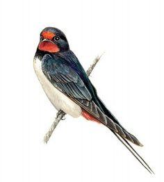 Pinstriping, Birds, Animals, School, Comic Strips, Animales, Animaux, Bird, Animal