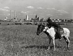 Dallas, Texas, year 1945.Skyline, Cowboy, Horseback.Vintage Texas photograph.Old Texas art print.