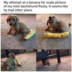 Animal Pictures with Captions that will Make You Smile -2