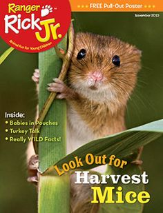 Read about adorable harvest mice in our November issue! www.nwf.org/kids
