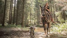 Foto: Österreich Werbung/Nina Baumgartner: Waldritt im Pferdereich Mühlviertler Alm Kaiser Franz, Hallstatt, Horses, Animals, Beautiful Curves, Rare Animals, Photo Mural, Tourism, National Forest