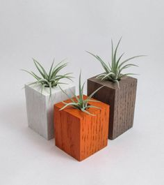 White, Brown, & Orange Wooden Air Plant Holders + 3 Air Plants. Made in #Oregon by Rhiannon Corvin-Blackburn of Spirit & Vine. (c) 2012-2017 Rhiannon Corvin-Blackburn