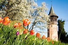 Der Schwedenturm auf der Blumeninsel Mainau