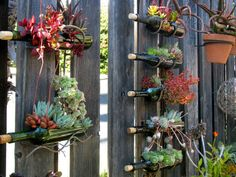 Here's an interesting vertical garden that uses wine bottle. But we don't know how the bottles are cut. Anyone of you lovely people know how it's done? View more vertical garden ideas on our site at h (Bottle Garden) Wine Bottle Garden, Wine Bottle Planter, Wine Bottle Tiki Torch, Wine Bottle Art, Diy Bottle, Beer Bottle, Empty Glass Bottles, Recycled Glass Bottles, Glass Bottle Crafts