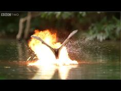Nature Documentary Remixed To Show Crocodiles & Flying Bats Battling w/ Lasers and Explosions