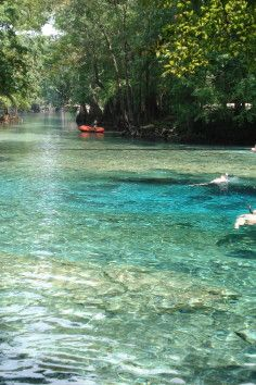 1 of the clearest springs in Florida, Ginnie Springs, High Springs, FL