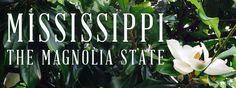 The Flower of the South: Magnolia Plantation