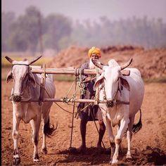 Punjab - Pind Life
