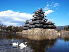Japan  松本城とお堀の白鳥