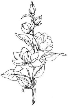 Magnolia Dessin Floral Fleur A Colorier Dessin Fleur 25 Beautiful Flower Drawing Ideas Inspiration Tattoo Design Beautiful Flower Drawing Outline Beautiful Flower Drawings, Flower Line Drawings, Flower Sketches, Beautiful Flowers, Drawing Flowers, Floral Drawing, Lotus Drawing, Flower Design Drawing, Mandala Drawing