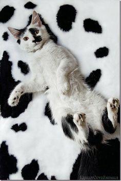 20130424-camouflage-cat