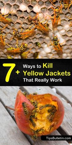 Learn how to kill yellow jackets to eliminate a single yellow jacket or an entire nest. Use a commercial insecticide or make a homemade solution. Wasp Traps, Bee Traps, Yellow Jacket Trap, Yellow Jackets, Wasp Spray, Wasp Repellent, How To Kill Bees, Everyday Dishes, Garden Pests