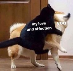 """101 I Love You Memes - """"My love and affection."""" memes funny 101 Best I Love You Memes to Share with the People You Love Cute I Love You, Cute Love Memes, Funny Love, Love You Memes, In Love Meme, Cute Memes For Her, I Love You Tumblr, Cute Couple Memes, Memes Humor"""