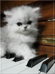 cute kitten #evil #Bad #NSFW