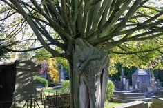 A cemetery walk