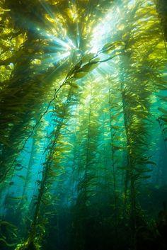 Swimming With the Seaweed at Anacapa Island (California)
