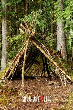 These 9 DIY survival shelters could just save your life when the sun is getting low and you're out of luck! #survivalshelter #DIYsurvivalshelter #survivalskills #survivaltips #survival #survivallife Survival Shelter, Survival Life, Camping Survival, Outdoor Survival, Survival Skills, Shelters, Sun, Plants, Animal Shelters