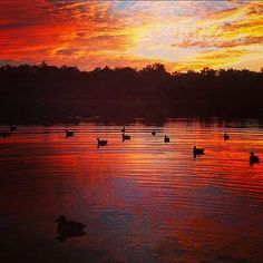 Good Morning from the Trinity River in Huntsville Texas.  Sigh.... Amazing capture by the @easttexasquackstackers. #texas #easttexas #pineywoods #texasforesttrail