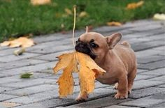 Fetching The Leaf