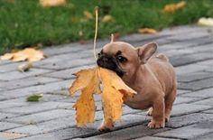 Fetching The Leaf