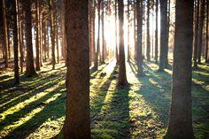 Austria, Österreich, Mostviertel, Niederösterreich, Landschaftsfotografie, Landscape Photography, Sabine Wieser Fotografie, Moststraße, Eisenstraße, Shadow, Schatten, Sunrise, Chasing Light, Forestphotography, Wald, Sonnenaufgang, Bäume, Forest