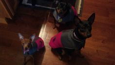 Jada, Reese, and Rayven my 3 min pins in their cute pink coats