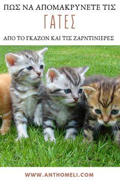 Πως να απομακρύνουμε τις γάτες από το γκαζόν και τις ζαρντινιέρες