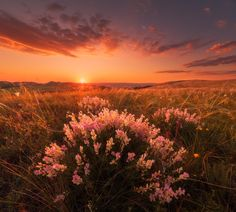 Evening in the steppe -