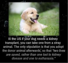 Do you know?  #PetClubIndia Photo Credited by Web.