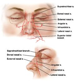 blood supply of nose - Google Search
