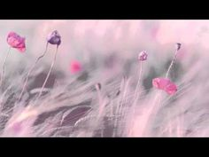 "3 HOURS Best Relaxing Music ""Romantic Piano"" - YouTube"