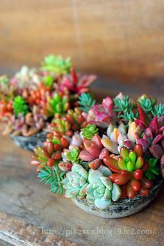 Succulents look pretty and are not too much work
