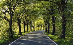 Tree lined road on Rügen island, Germany