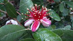 Find Quality Seeds and Bulbs at pangaiaseeds.com Bulbs, Seeds, Garden, Flowers, Plants, Lightbulbs, Garten, Florals, Gardens