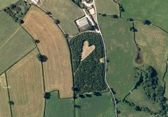 Farmer Secretly Creates Heart-Shaped Meadow for Lost Wife